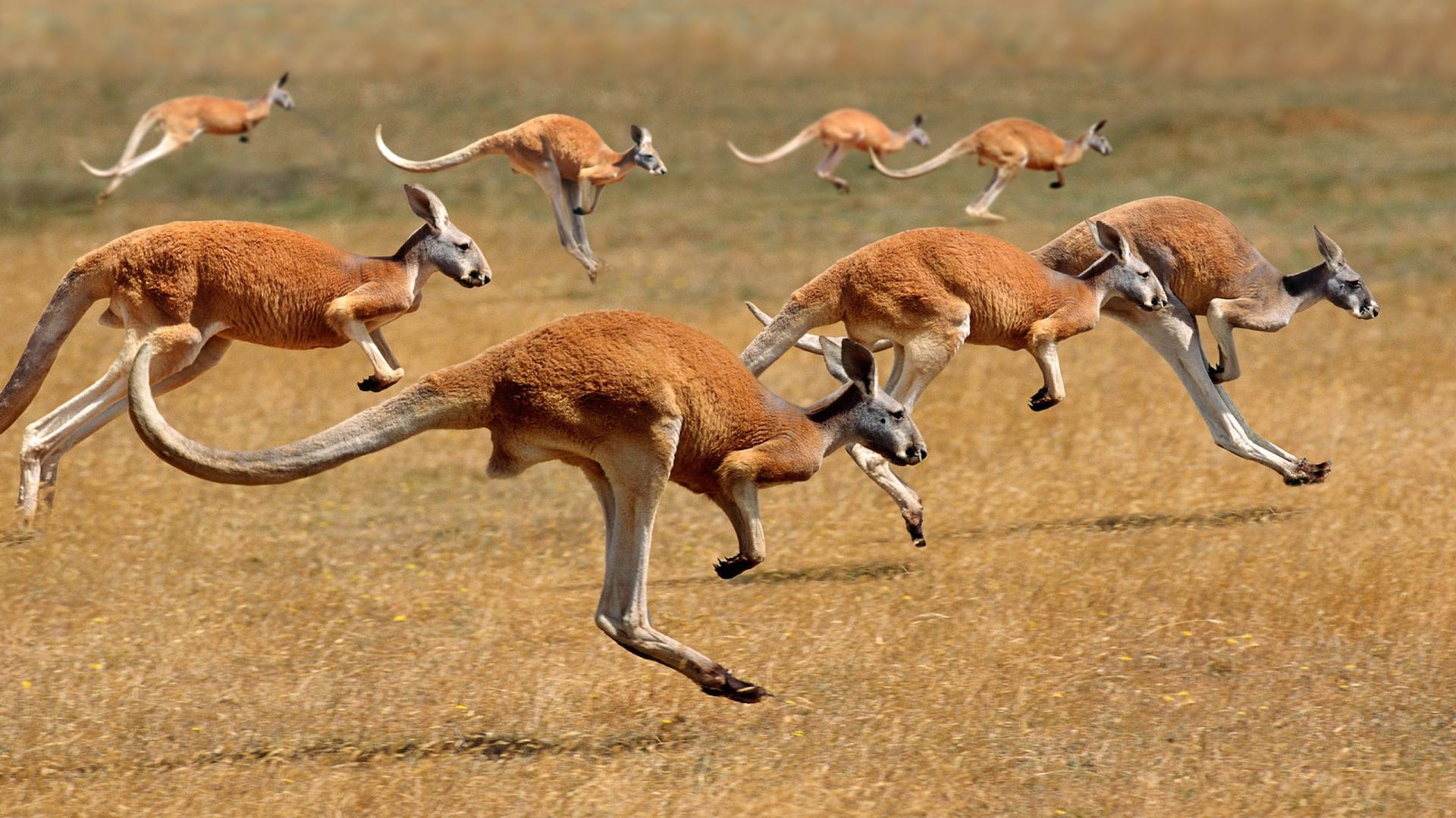 Podr 211 Ż Do Australii Milesaway